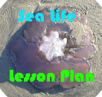 Long Beach Peninsula Sea Life Lesson Plan